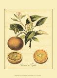 Petite Tuscan Fruits III Posters