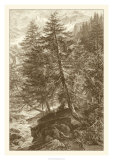 Sepia Larch Tree Giclee Print by Ernst Heyn
