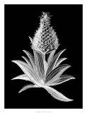 Pineapple Noir I Giclee Print
