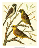 Domestic Bird Family I Giclee Print by W. Rutledge