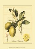 Petite Tuscan Fruits II Plakater