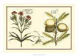 Garden Botanica IV Giclee Print