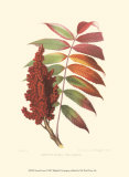Smooth Sumac Prints by  Sprague