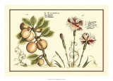 Garden Botanica II Giclee Print