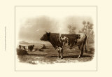 Bovine III Poster by Emile Van Marck
