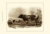 Bovine III Prints by Emile Van Marck