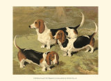 Basset Hounds Prints by Vero Shaw