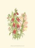 Summer Garden VIII Prints by Anne Pratt