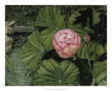 Enchanting Lotus Giclee Print by Gloria J. Callahan