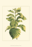 Tropical Variegation III Print