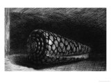 The Shell, 1650; The Shell is a Conus Marmoreus, Native to South-East Africa, Polynesia and Hawaii Giclee Print by  Rembrandt van Rijn