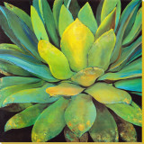 Agave Stretched Canvas Print by Jillian David
