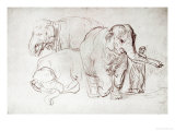Three Elephants Giclee Print by  Rembrandt van Rijn