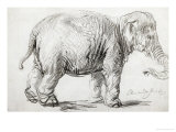 Elephant, 1637, Black Chalk Drawing Reproduction procédé giclée par Rembrandt van Rijn