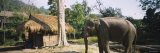 Elephant Standing Outside a Hut in a Village, Chiang Mai, Thailand Photographic Print by  Panoramic Images