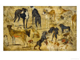 Animal Studies: Dogs Giclée-Druck von Jan Brueghel the Elder