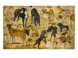 Animal Studies: Dogs Giclée-Druck von Jan Brueghel the Elder