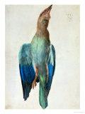 Roller (Bird), 1512 Reproduction procédé giclée par Albrecht Dürer