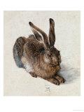 Hare, 1502 Reproduction procédé giclée par Albrecht Dürer