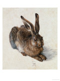 Hare, 1502 Giclee Print by Albrecht D&#252;rer