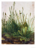 Large Piece of Turf, 1503 Reproduction procédé giclée par Albrecht Dürer