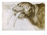 Walrus, Pen and Ink on Paper, 1521 Giclee Print by Albrecht Dürer