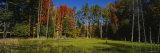 Trees in the Forest, Catskill Mountains, New York State, USA Photographic Print by  Panoramic Images