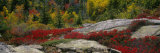 Flowers on Rocks, Acadia National Park, Maine, USA Photographic Print by Panoramic Images