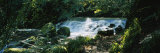 Waterfall in the Forest, Birks O' Aberfeldy, Perthshire, Scotland Photographic Print by  Panoramic Images