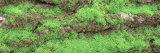 Green Moss on Tree Bark, Sacramento, California, USA Photographic Print by  Panoramic Images