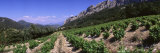Vineyard on the Mountain, Dentelles de Montmiral, Provence, France Photographic Print by  Panoramic Images