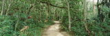 Trees on Both Sides of a Path, Fort Caroline National Memorial, Jacksonville, Florida, USA Photographic Print by  Panoramic Images