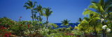 Palm Trees in a Garden, Tropical Garden, Kona, Hawaii, USA Photographic Print by  Panoramic Images
