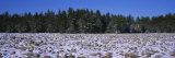 Rocks in Snow Covered Landscape, Hickory Run State Park, Pocono Mountains, Pennsylvania, USA Stampa fotografica di Panoramic Images,