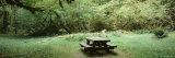 Picnic Table, Hoh Rain Forest, Olympic National Park, Washington State, USA Photographic Print by  Panoramic Images