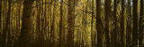 Trees in a Forest, New Mexico, USA Fotografie-Druck von Panoramic Images