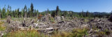 Timber Cut Down in a Forest, Olympic National Forest, Washington State, USA Photographic Print by  Panoramic Images