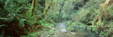 Stream in a Forest, Van Damme State Park, Mendocino, California, USA Photographic Print by  Panoramic Images