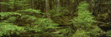 Moss Covered Trees in the Forest, Tongass National Forest, Alaska, USA Photographic Print by  Panoramic Images