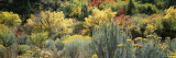 Flowers, Utah County, Utah, USA Photographic Print by  Panoramic Images