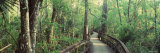 Boardwalk at Big Cypress Bend, Fakahatchee Strand State Preserve, Florida, USA Photographic Print by  Panoramic Images
