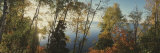 Trees in Front of a Lake, Minnesota, USA Photographic Print by Panoramic Images