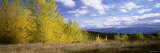Autumn Trees at a Park, Fjordland National Park, New Zealand Photographic Print by  Panoramic Images