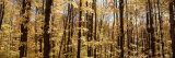 Trees in a Forest, Alleghany State Park, New York State, USA Photographic Print by  Panoramic Images