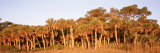 Trees in Autumn, Hunting Island State Park, South Carolina, USA Photographic Print by  Panoramic Images