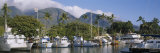 Boats Moored at a Harbor, Lahaina, Maui, Hawaii, USA Photographic Print by  Panoramic Images