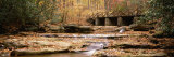 Stream Flowing through the Forest, Cucumber Run, Ohiopyle State Park, Pennsylvania, USA Photographic Print by  Panoramic Images