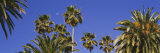 Palm Trees, Santa Monica, Los Angeles County, California, USA Fotografie-Druck von Panoramic Images