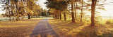 Autumn Tree along a Road, Middleburg, Virginia, USA Photographic Print by Panoramic Images