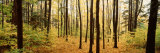 Trees in a Forest, Chestnut Ridge Park, Orchard Park, New York State, USA Photographic Print by  Panoramic Images